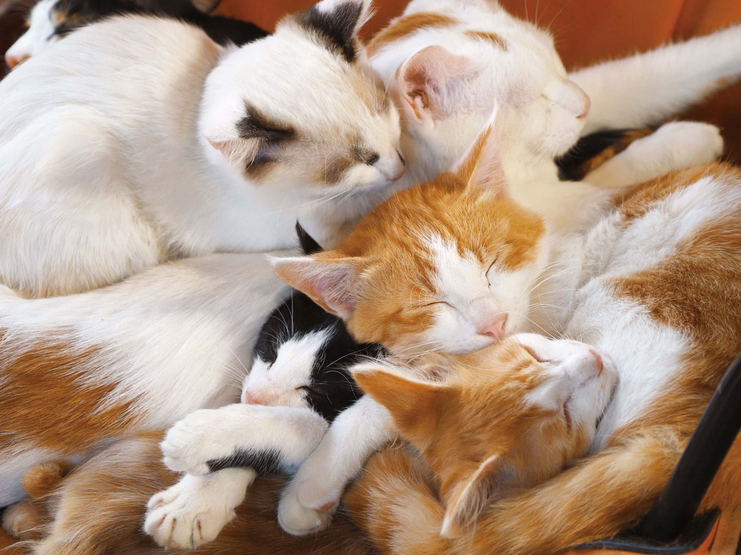 劇場版 岩合光昭の世界ネコ歩き あるがままに、水と大地のネコ家族